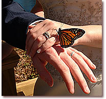 Butterflies and Rings
